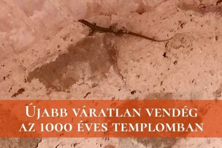 Újabb váratlan Vendég az 1000 Éves Templomban