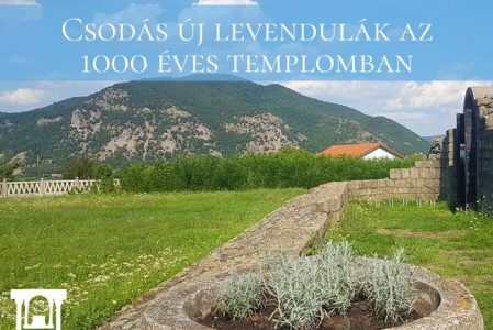 Csodás új levendulák az 1000 Éves Templomban